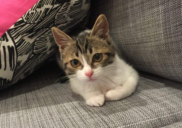 子猫 来たる - 新しい家族が増えました